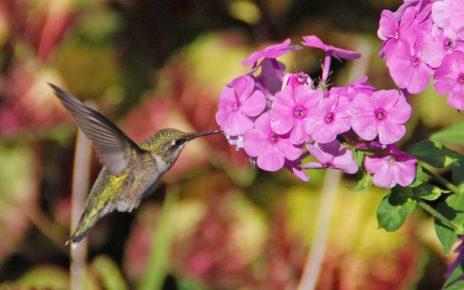 Hummingbird on flower