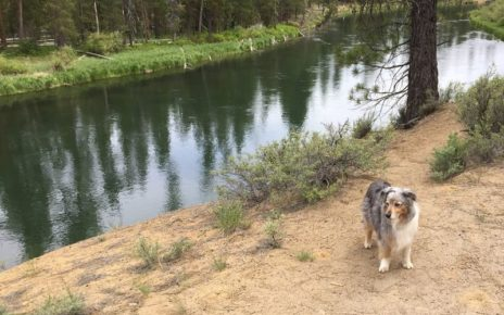 dog on dirt trail by river
